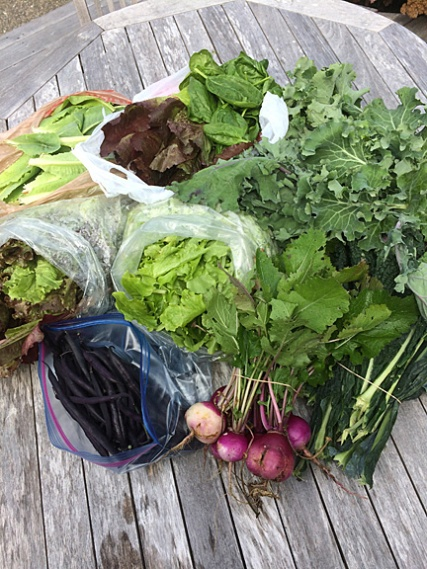 Donated Produce