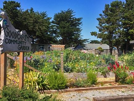 July 2017 - a healthy happy garden spot